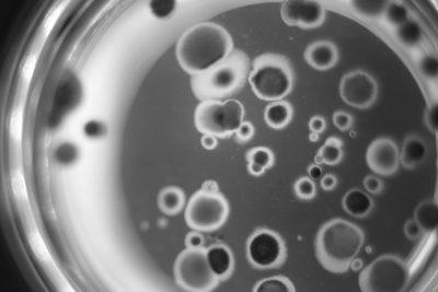 Foodlab microbiologie