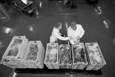 bakken met vis